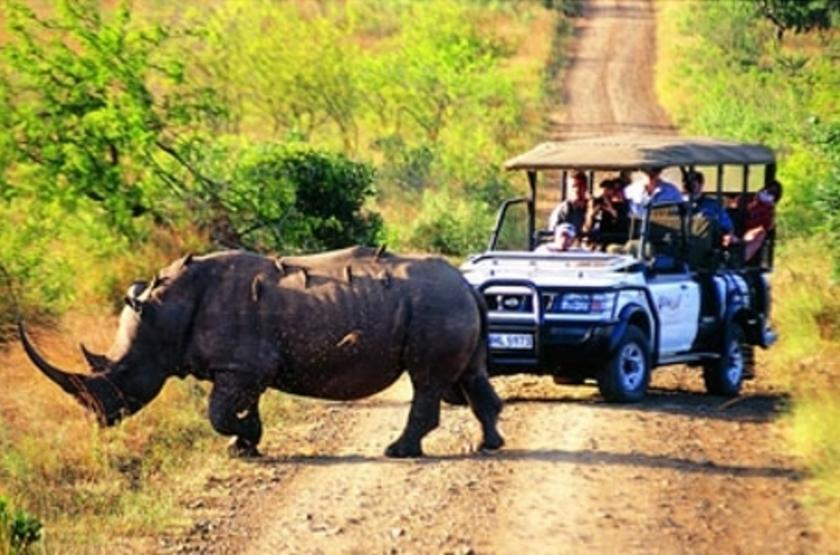 Hluhluwe River Lodge, Afrique du Sud, safari en 4x4
