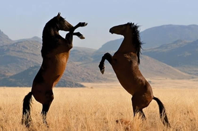 Klein Aus Vista, Aus, Namibie, chevaux