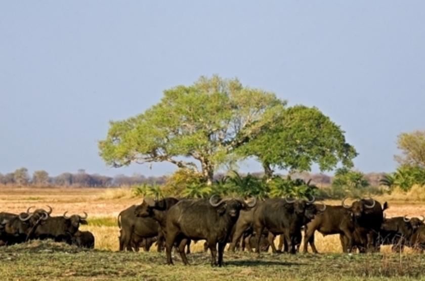 Kapinga Camp, Kafue, Zambie, safari à pied
