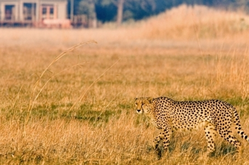 Kapinga Camp, Kafue, Zambie, safari en 4x4