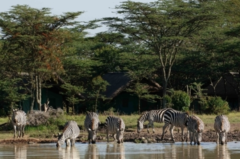 Sweetwaters Serena Tented Camp, Ol Pejeta, Kenya, point d'eau