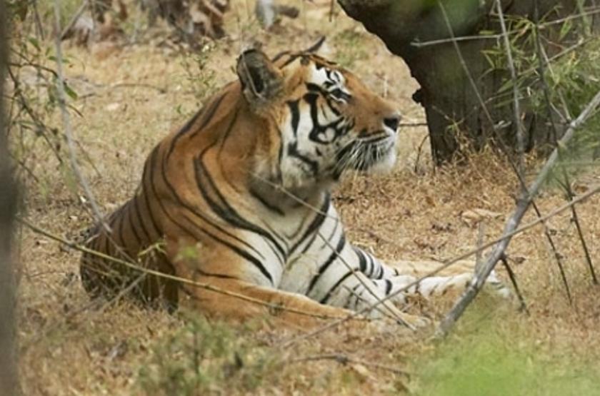 Camp Mewar, Parc de Bandhavargh, Inde