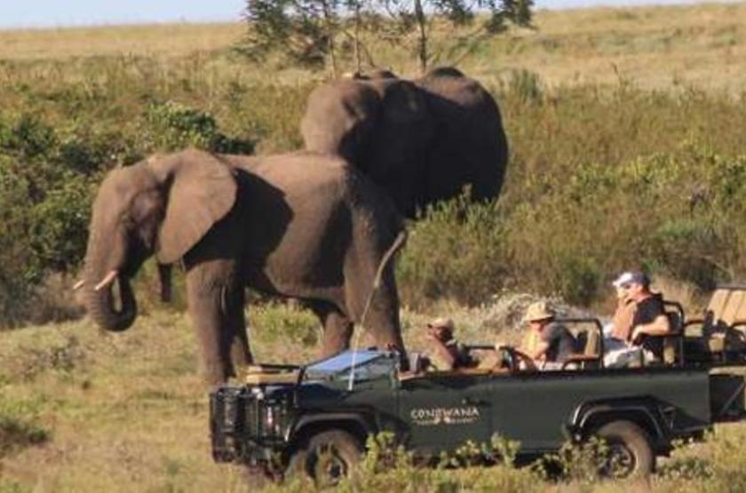 Gondwana Game Reserve, Afrique du Sud, safari en 4x4