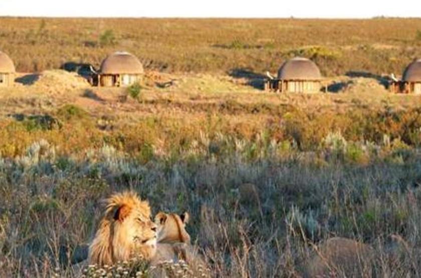 Gondwana Game Reserve, Afrique du Sud, vue d'ensemble