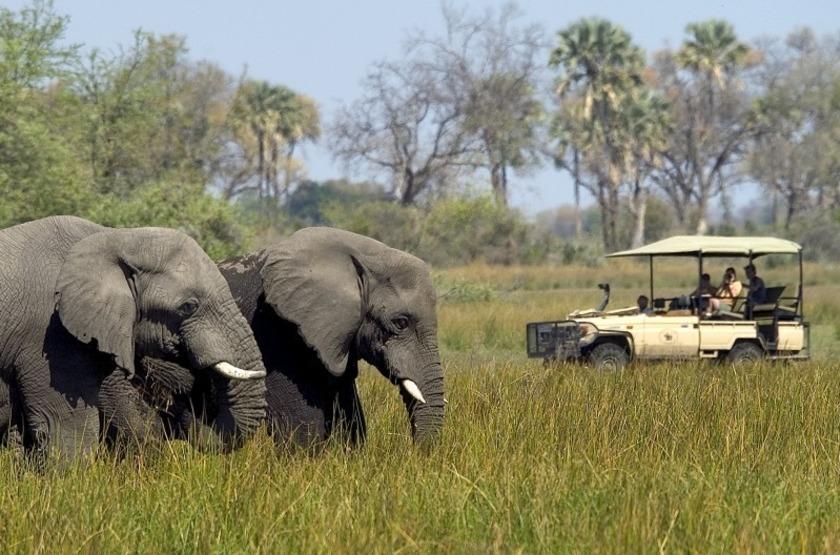 Abu Camp, Delta de l'Okavango, Botswana, safari en 4x4