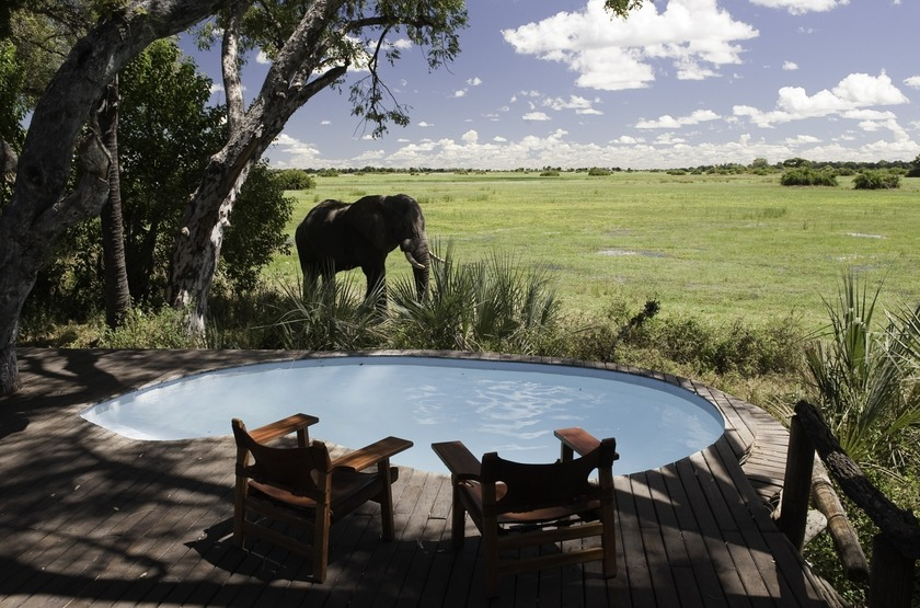 Botswana   mombo camp   piscine   elephant slideshow