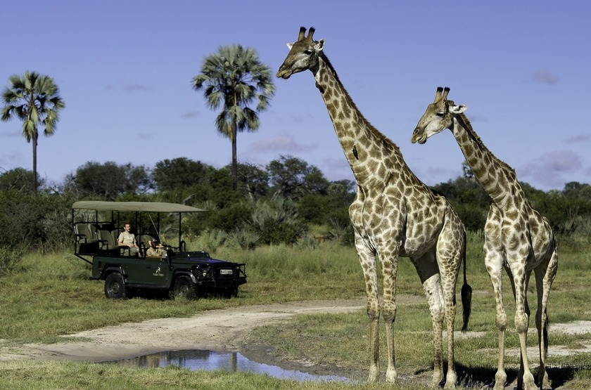 Jao Camp, concession de Jao, Botswana, safari en 4x4