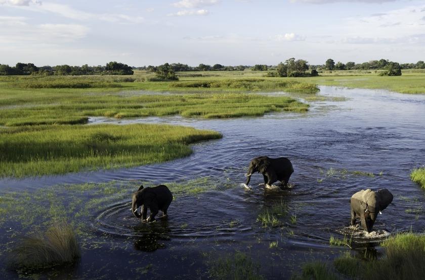 Jao Camp, concession de Jao, Botswana, éléphants
