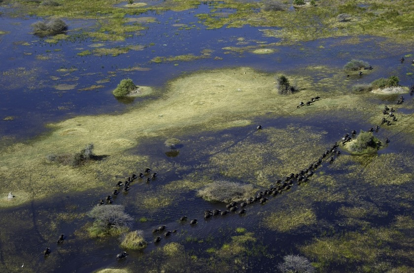 Botswana   vumbura plains   okavango   elephants slideshow