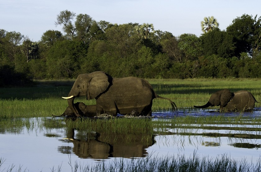 Botswana   jacana camp   elephants slideshow