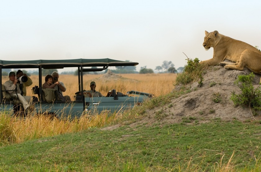 Botswana   selinda camp   safari   lion slideshow