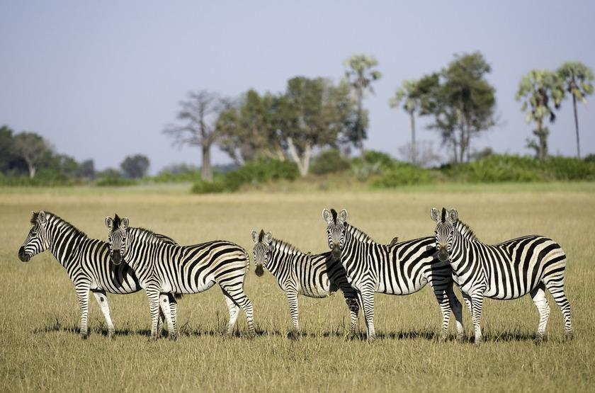 Tubu Tree Camp, concession de Jao, Okavango