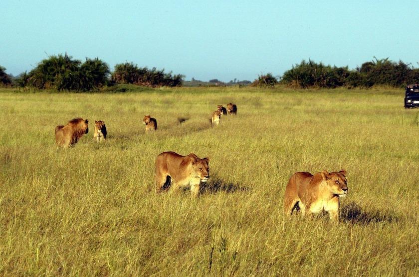 Duba Plains, réserve de la Moremi, Botswana, safari en 4x4