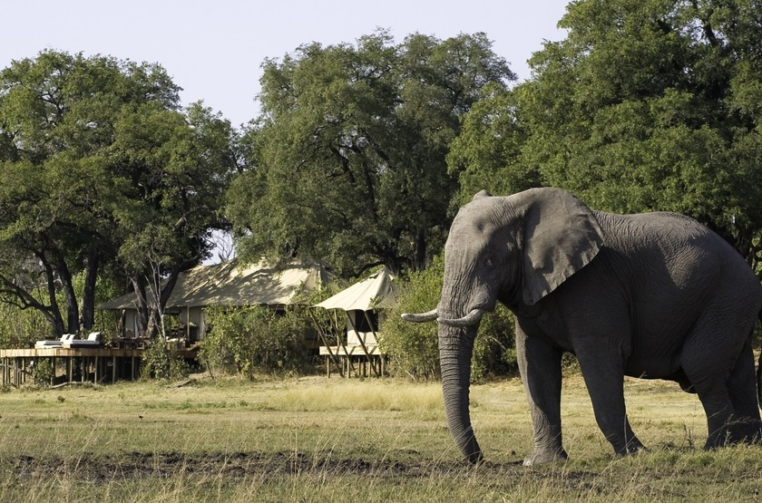 Botswana   zafara camp   tentes slideshow