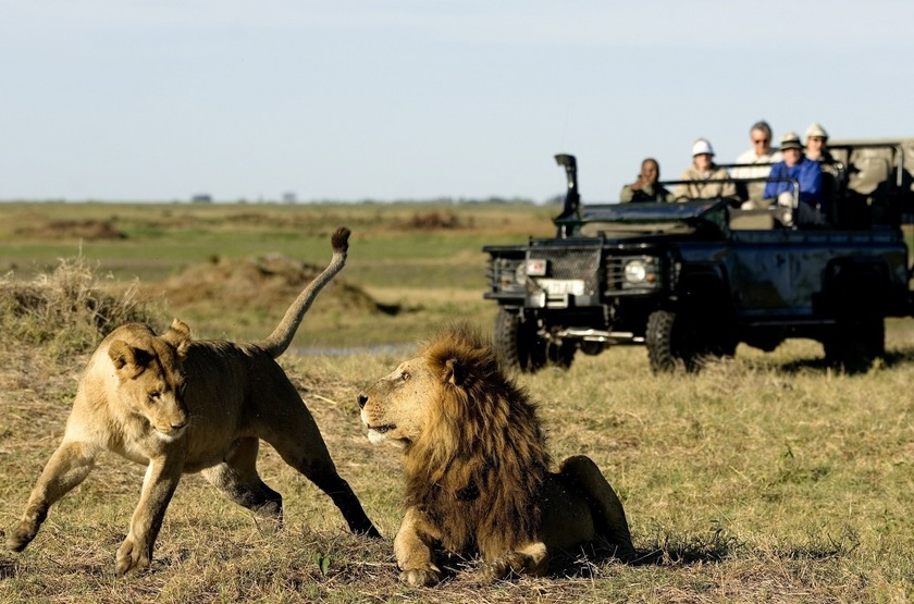 Botswana   duba plains   safari   4x4 slideshow