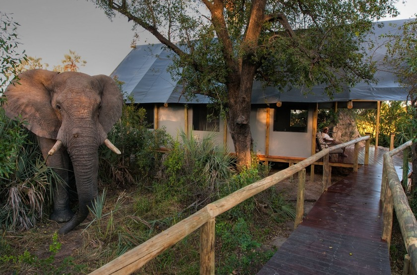 Chitabe Lediba Camp, delta de l'Okavango, tente
