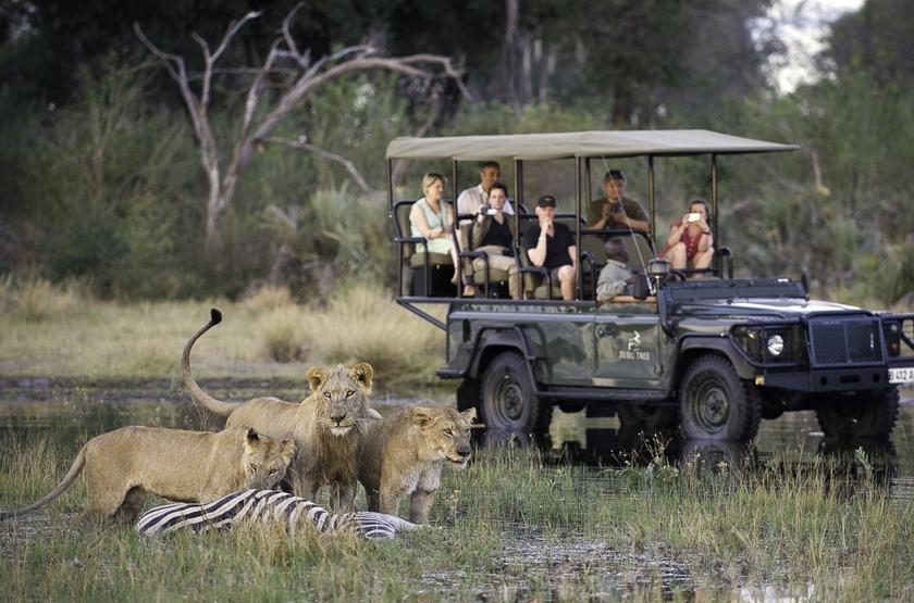 Tubu Tree Camp, concession de Jao, Okavango, safari en 4x4