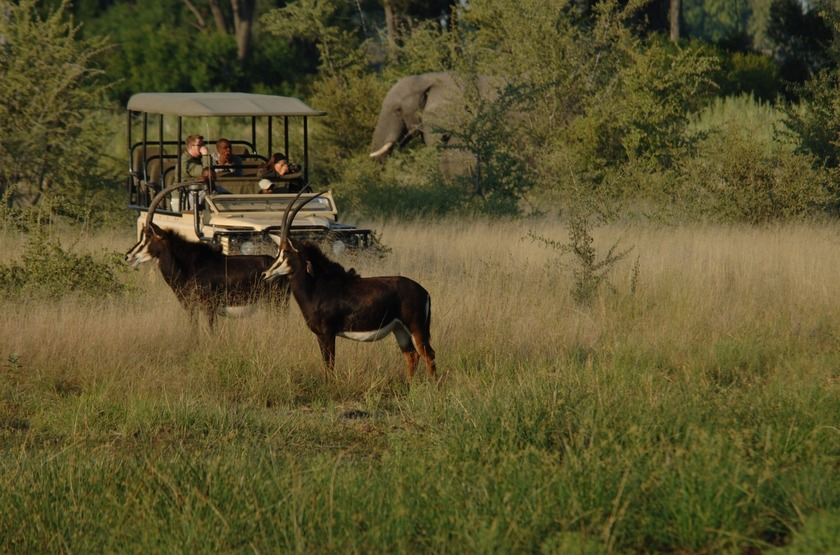 Little Vumbura, Okavango, Botswana, safari en 4x4