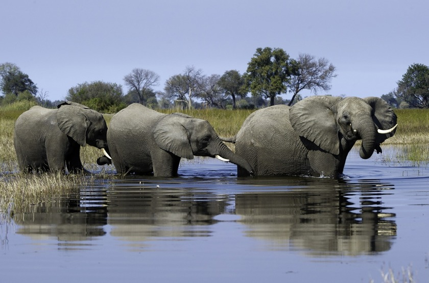 Little Vumbura, Okavango, Botswana, éléphants