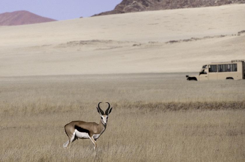 Kulala Desert Lodge, Sossuvlei, Namibie, nature drive