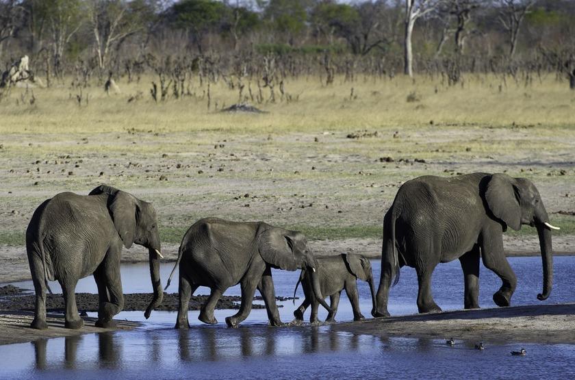 Little Makalolo, Parc Hwange, famille éléphants
