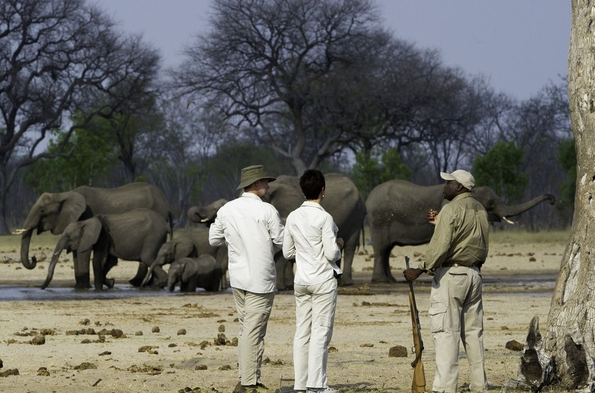 Zimbabwe   little makalolo   safari   pied   hwange slideshow
