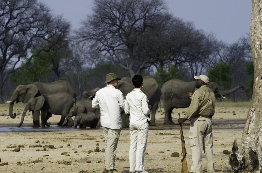 Little Makalolo, Parc Hwange, safari à pied