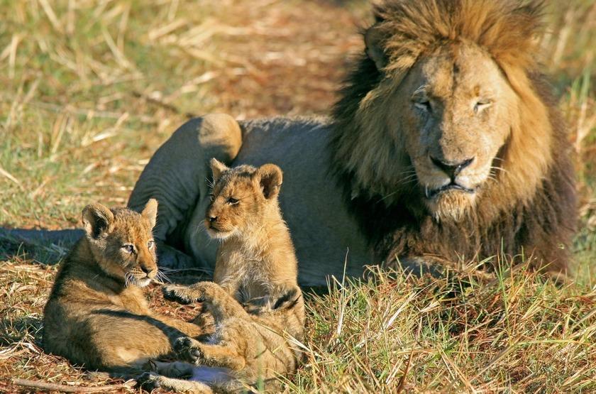 Shumba Camp, Parc de Kafue, Zambie, safari en 4x4