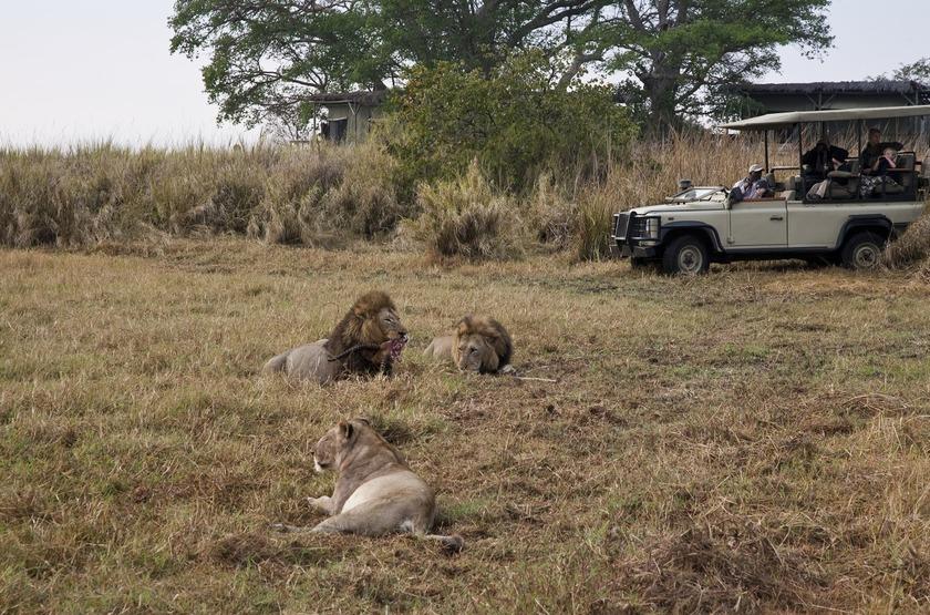 Zambie   shumba   safari   buzanga slideshow
