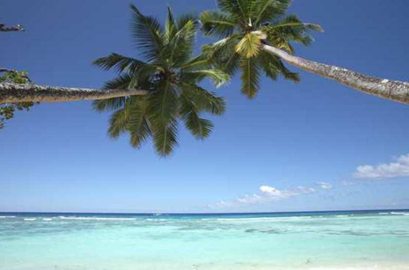 Seychelles   silhouette   plage et cocotiers slideshow