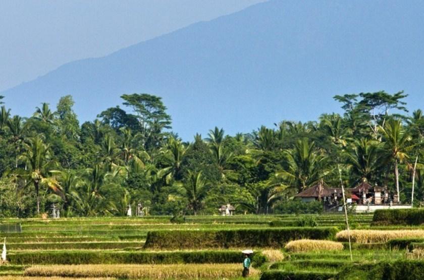 Uma Ubud, Bali,  Indonésie, rizières