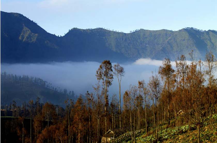 Java banana   bromo   paysage 2 slideshow
