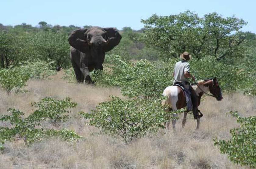 Grootberg Lodge, Namibie, balade à cheval