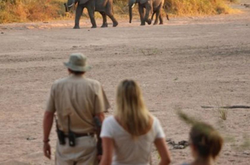 Jongomero Camp, parc de Ruaha, Tanzanie, safari à pied