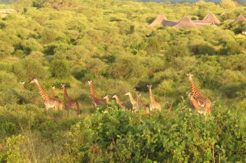 Roika tarangire tented camp slideshow