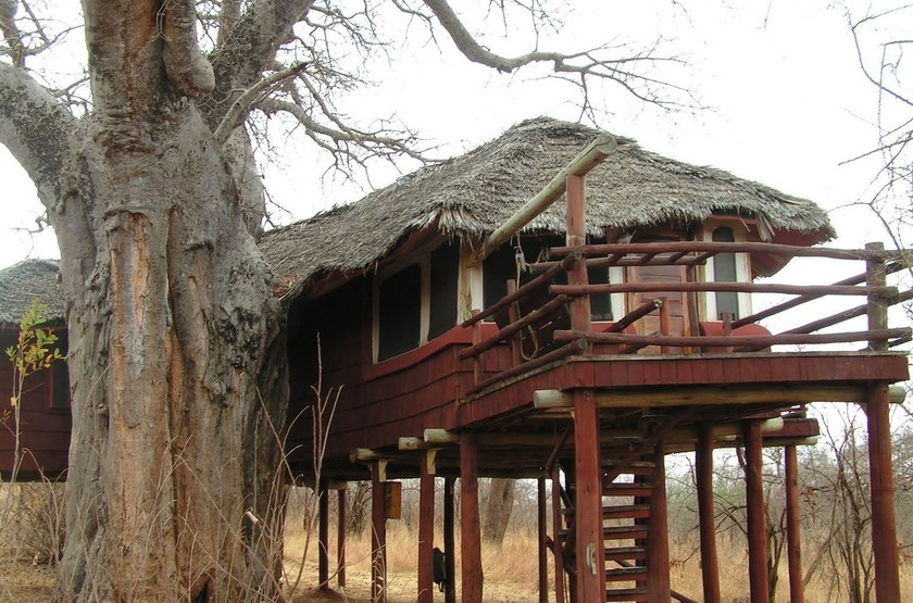 Tarangire tree tops slideshow