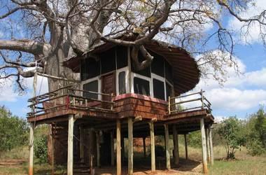 Tarangire treetops s6 listing