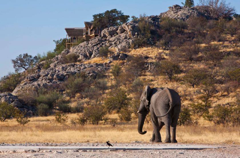 Dolomite Camp, Parc Etosha Ouest, Namibie, safari