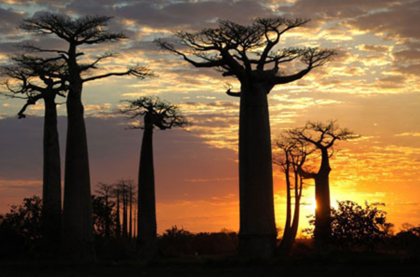 Camp amoureux morondova madagascar   baobabs slideshow
