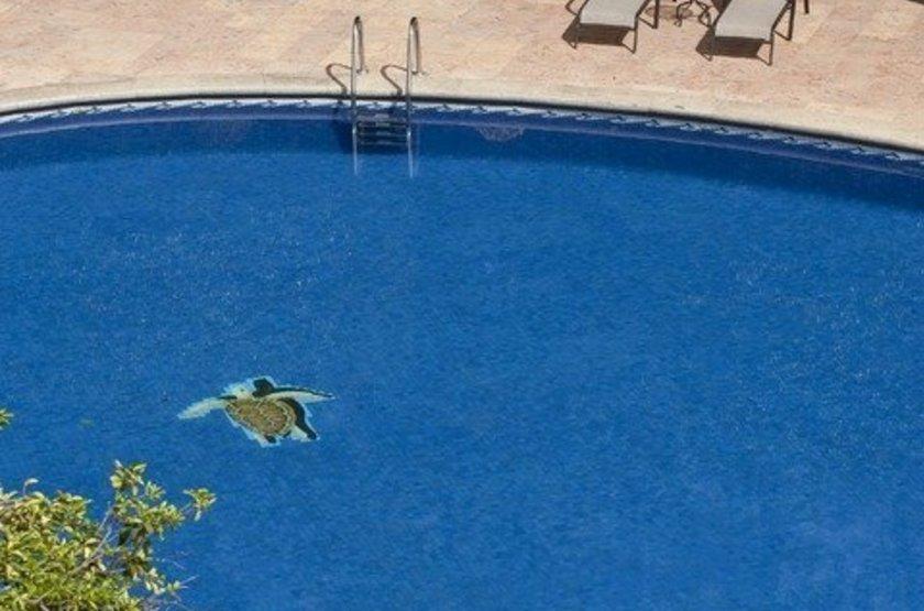 Hyatt Regency, Villahermosa, Mexique, piscine