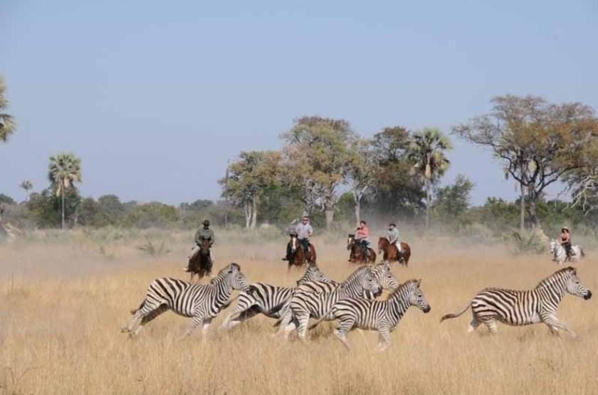 Botswana okavango   macatoo horse safari3 slideshow