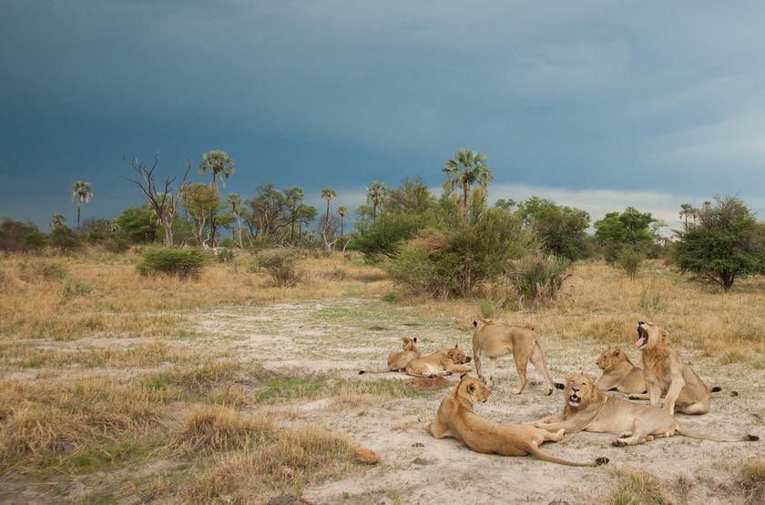 Chitabe Lediba Camp, delta de l'Okavango, safari en 4x4