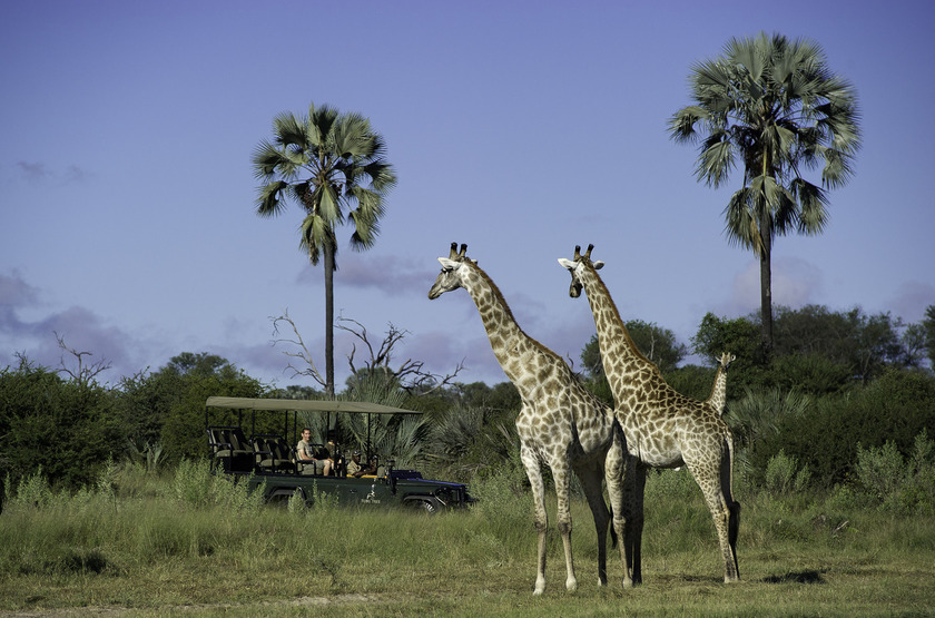 Little Tubu, concession de Jao, Okavango, Botswana, safari en 4x4