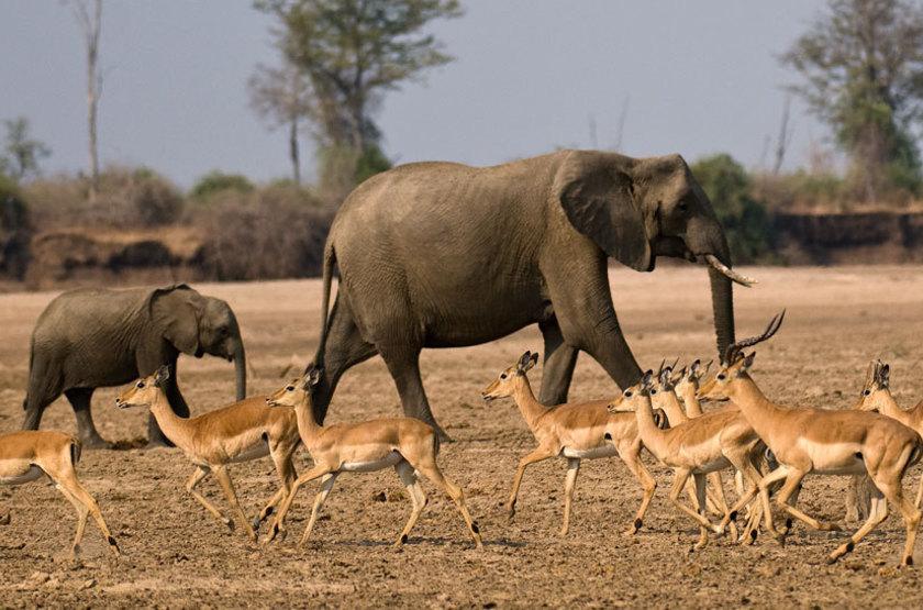 Tafika Camp, South Luangwa, Zambie, safari en 4x4