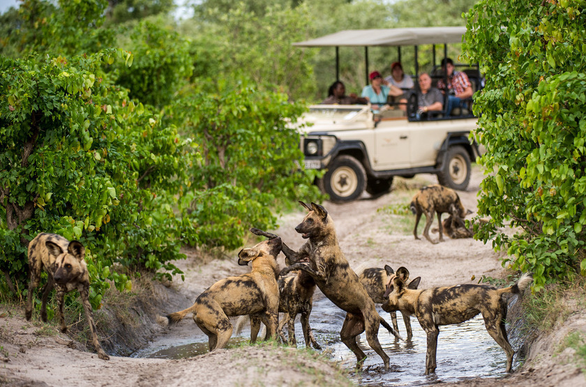 Duma Tau Camp, rivière de Savuti, Botswana, safari en 4x4