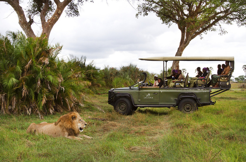 Jacana camp   game drive lion slideshow