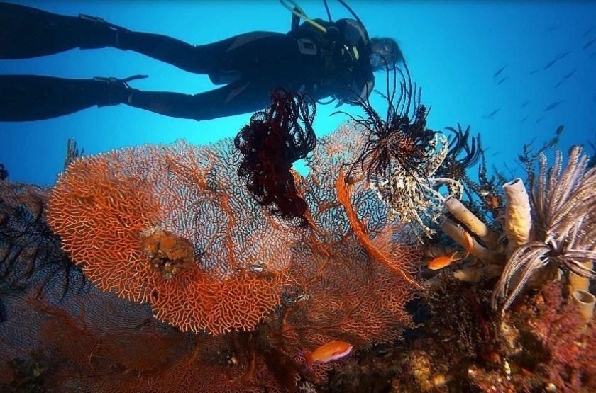 Alila Manggis Candidasa, Bali, Indonésie, plongée