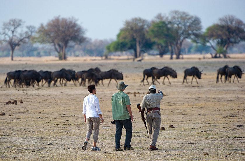 Davison's Camp, Parc Hwange, Zimbabwe, safari à pied