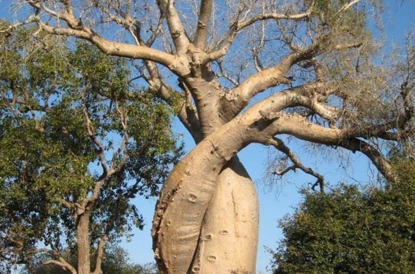Grand baobab slideshow