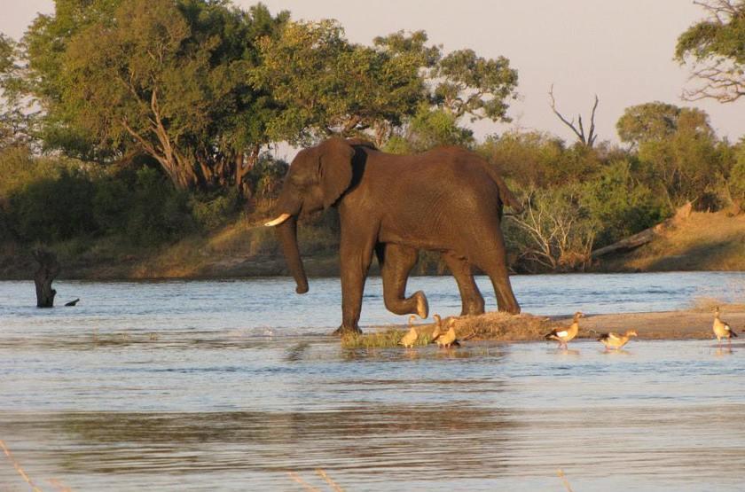 Chundu Island, Parc de Zambezi, Zimbabwe, safari en bateau